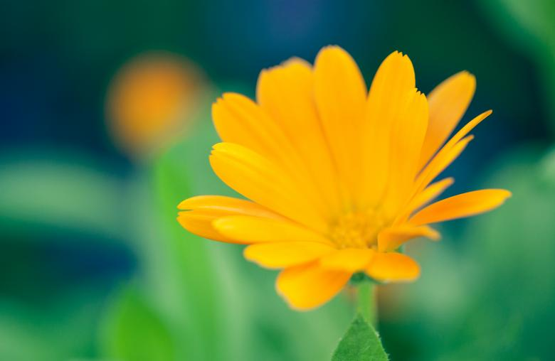 Yellow Summer Flower - Free Floral Backgrounds