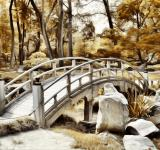Free Photo - The Woodland Bridge