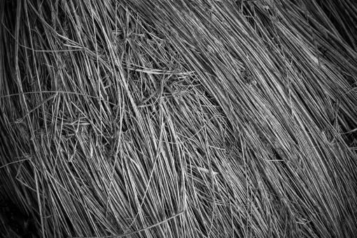 Fallen Grass Texture - Free Stock Photo