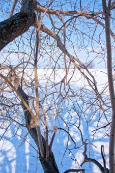 winter tree branches - Free Stock Photo
