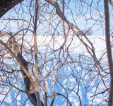 Free Photo - winter tree branches