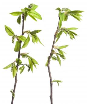 green branch - Free Stock Photo