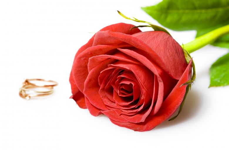 Roses and rings - Free Valentines Day Images