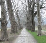 Free Photo - Forest Road