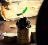 Free Photo - Money growth concept