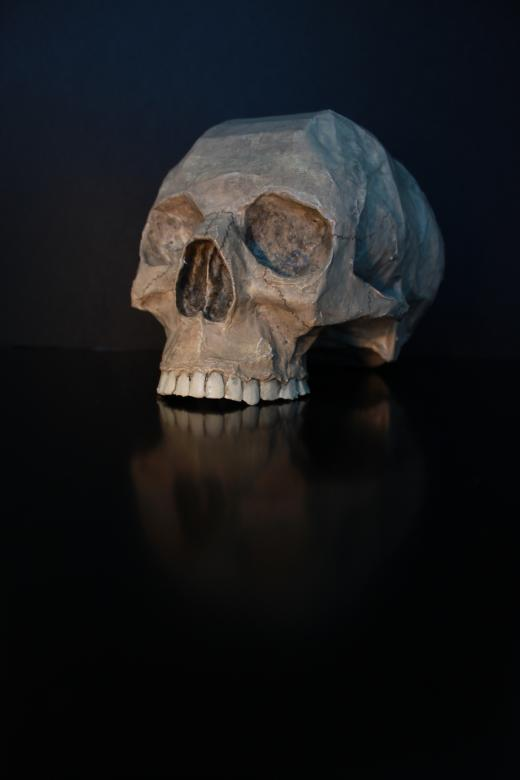 Free Stock Photo of Skull Created by Lorwyn
