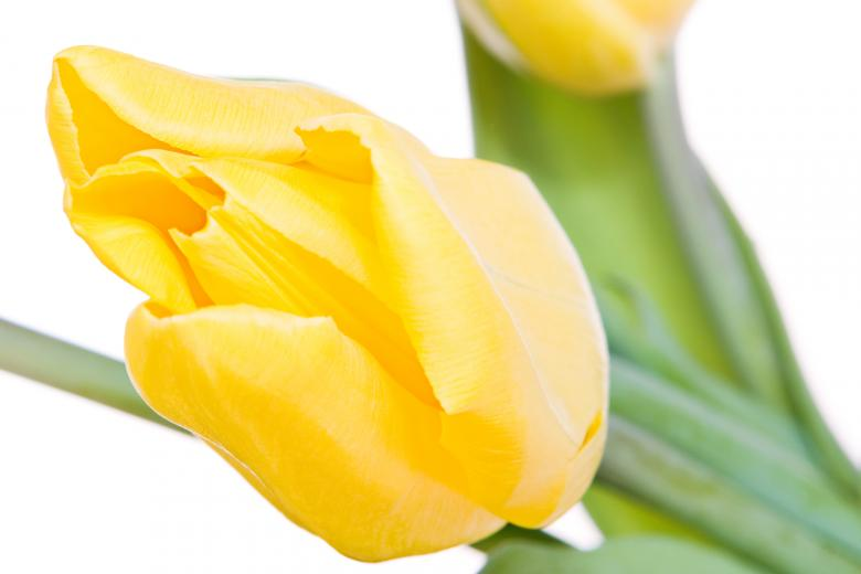 Free Stock Photo of Yellow tulips Created by 2happy