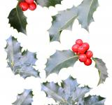 Free Photo - Christmas holly cutouts