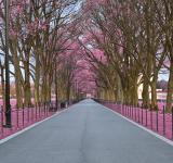 Free Photo - National Mall Promenade - Pink HDR