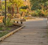 Free Photo - Botanical Gardens Boardwalk - HDR
