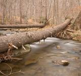 Free Photo - Cunningham Forest Stream - HDR