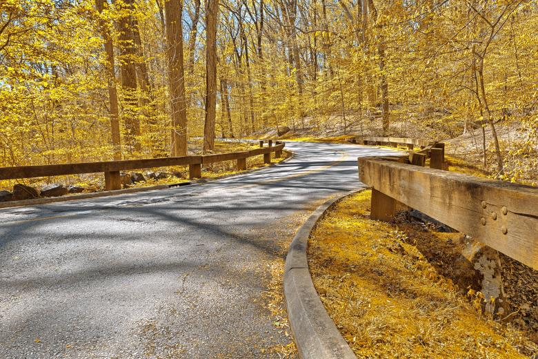Free Stock Photo of Gold Forest Road - HDR Created by Nicolas Raymond