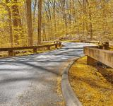 Free Photo - Gold Forest Road - HDR
