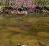 Free Photo - Rock Creek Stream & Foliage - Green & Pi