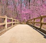 Free Photo - Bridge to Pink Paradise - HDR