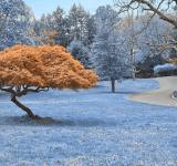 Free Photo - Woodend Sanctuary Scenery - Winter Blue