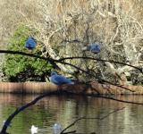 Free Photo - Birds in Southampton Common Pond