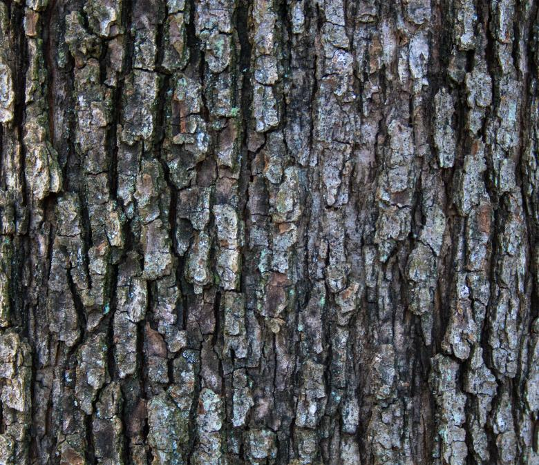 Free Stock Photo of Wood bark Created by Alen