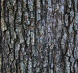 Free Photo - Wood bark
