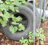 Free Photo - Old tires