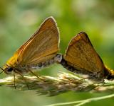 Free Photo - Skipper Butterfly