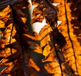 Free Photo - Dried leaves
