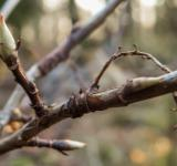 Free Photo - Just a branch