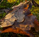 Free Photo - Old leaves
