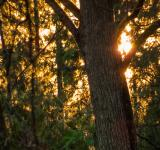 Free Photo - Sunset behind a tree