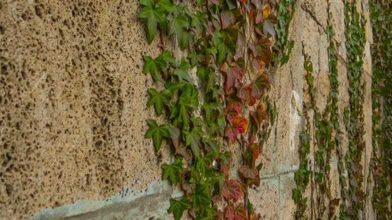 Free Stock Photo of Wall plant  Created by Janis Urtans