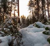 Free Photo - Snowy Forest