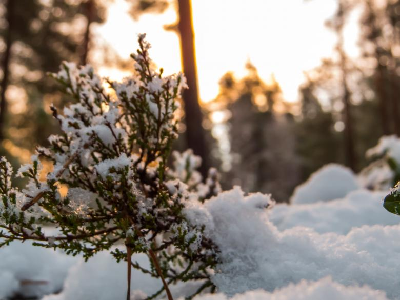Free Stock Photo of Snowy Forest Created by Janis Urtans