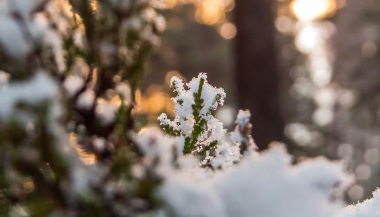 Free stock image of Snowy Forest created by Janis Urtans