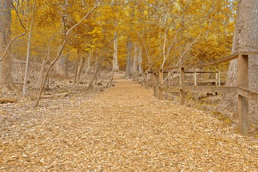 Gold Sanctuary Trail - HDR - Free Stock Photo