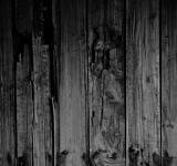 Free Photo - Rotten Wood Texture