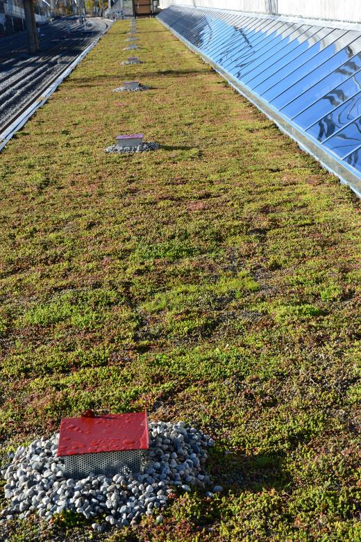 Free Stock Photo of Flat green roof Created by Tomas Adomaitis