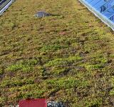 Free Photo - Flat green roof