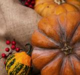 Free Photo - Pumpkins