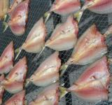 Free Photo - Drying Fish