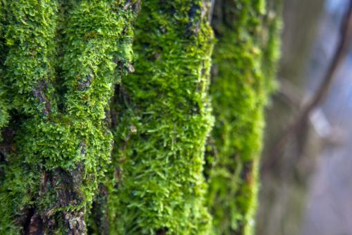 Moss on tree - Free Stock Photo