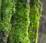 Free Photo - Moss on tree