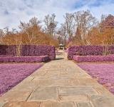 Free Photo - Brookside Gardens Path - Ultra Violet HD