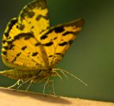Free Photo - Yellow butterfly close up