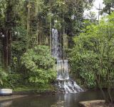 Free Photo - Waterfall in the jungle