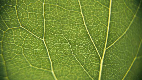 Leaf macro texture - Free Stock Photo