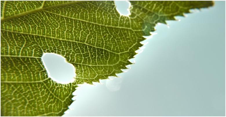 Free Stock Photo of Grean leaf structure Created by Mili Vigerova