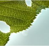 Free Photo - Grean leaf structure