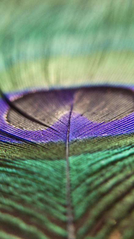 Free Stock Photo of Peacock feather Created by Mili Vigerova