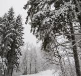 Free Photo - A beautiful winter in woods