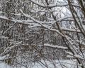 Free Photo - Just some branches cover with snow